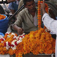 Flower sellers, marigold heaven, chandni chowk, dehli
