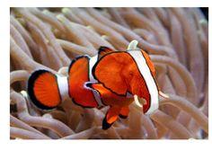 elephant fish - Google Search
