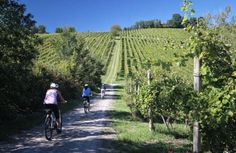 Excursions on two wheels accompanied by an expert guide to discover the history, art, landscape and gastronomy attractions of this region: Treasuries of the cities of art, medieval castles and hamlets, authentic flavours of typical DOP products. #dreavel #biketours #ebike #castellodirivalta #castellarquato #parma #discoveremiliaromagna #tourism #toursinemiliaromagna #emiliaromagna #hiddentreasures #igersitalia