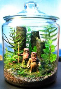 cool terrariums - Google Search