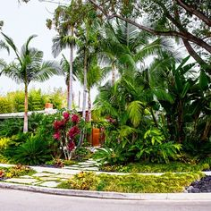 Front yard: After - Tropical Plants Retreat - Sunset.com says Orange County, and uses less water than the lawn it replaces. Hmmm...interesting article.