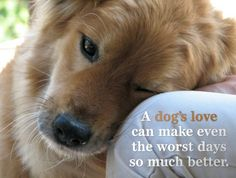 Quotes For Dog Lovers - Bing Images.I love my dog! Love My Dog, Baby Dogs, Dogs And Puppies, Doggies, Animals And Pets, Cute Animals, Baby Animals, Amor Animal, Dog Quotes
