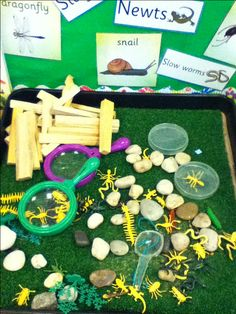 Mini beasts small world Eyfs Activities, Spring Activities, Minibeasts Eyfs, Role Play Areas, Tuff Spot, Mini Beasts, Class Displays, Tuff Tray, Primary Science
