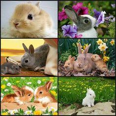 Cute bunnies - via Amazing World's photo on Google+