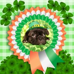 ST. Patrick's Day is near. Be prepared with PhotoMontager new templates!