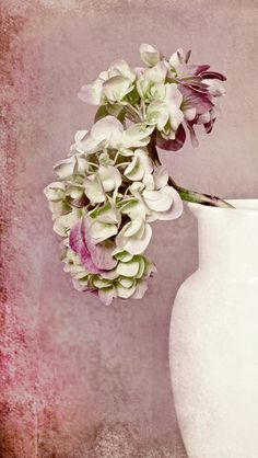 'Hortensie in Vase' von joshi bei artflakes.com als Poster oder Kunstdruck $16.63 #Fotografie #closeup #nah #Makro #Makrofotografie #Blüte #Blumen #Flower #flowers #natur #Natur #Naturliebhaber #naturelovers #detail #Schönheit #Textur #Photoshop #dekorativ #fineart #stilleben #Hortensie #stilleben
