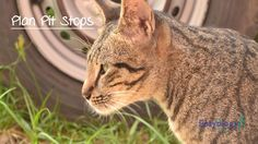Plan for Pit Stops During Travel with Your #cats! @easyologypets