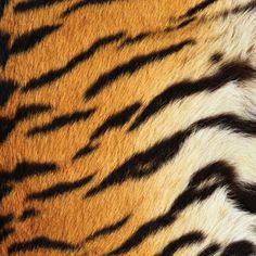 SugarTree - 12 x 12 Paper - Tiger Stripes at Scrapbook.com $0.69