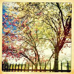 ©Rebecca Holt   wordsthatbreathe.com