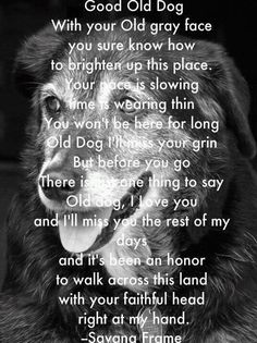 good old dog ~ oh my I actually cried.  Your pace is slowing, time is wearing thin, You wont be here for long - Old Dog Ill miss your grin.  But before you go there is one thing to say, Old Dog, I Love You and Ill miss you the rest of my days and its been an honor to walk across this land with your faithful head right at my hand.    ~ Savana Frame