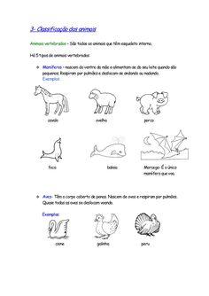 3- Classificação dos animais  Animais vertebrados – São todos os animais que têm esqueleto interno.  Há 5 tipos de animais...