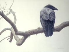 Lone Raven | Robert Bateman | Artwork | National Museum of Wildlife Art