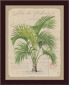 palm framed print - Bing Images