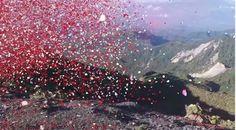 800万枚の花びらが舞うSONYのカラフルCM |美術覚書