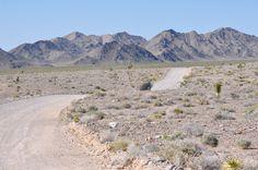 JD's Scenic Southwestern Travel Destination Blog: The Spring Wildflower Bloom at the Desert National Wildlife Range, Nevada!