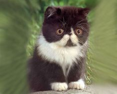 adorable kitten pics | Cute Kittens - Pictures - The Wondrous Pics