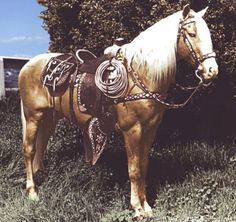 Trigger, originally named Golden Cloud, was a hands palomino horse, made famous in American Western films with his owner/rider, cowboy star Roy Rogers. Trigger's sire was a Thoroughbred and his dam a grade (unregistered) mare who was a palomino. All The Pretty Horses, Beautiful Horses, Animals Beautiful, Cute Animals, Palomino, Clydesdale, Arte Equina, Looks Country, The Lone Ranger