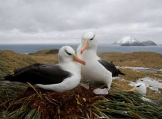 With 25,000 seabirds drowned by fishing nets in South America every year, it's time for tougher rule enforcement…
