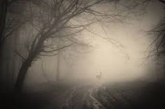 Image result for spooky forest background