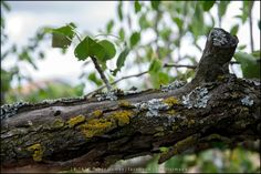 Quintela de Lampaças  [2014 - Macedo de Cavaleiros - Portugal]  #natureza #naturaleza #nature #fotografia #photography #foto #photo #europa #europe @visitportugal