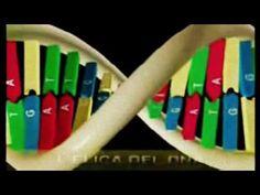 Il DNA, il 'software' che gestisce la cellula prova la CREAZIONE!