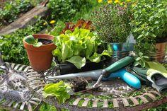 Не забывайте подкармливать овощи и травы в горшках