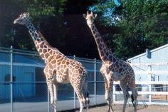 Adirondack Animal Land ::Welcome to the Zoo::