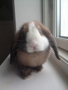 Heaven on Earth. Look at this gorgeous bunny. That face , those eyes.