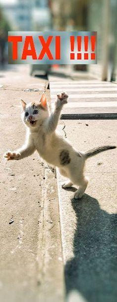 Guide du chaton débrouillard : 1- t'as les coussinets échauffés prend un taxi pour rentrer ! 2- ...