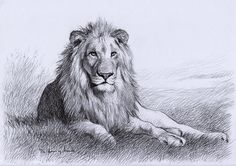 Resting Lion by ~thedrawinghands on deviantART