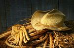 Stock Photos of Straw hat with gloves on a bale of hay in barn csp1696693 - Search Stock Images, Photographs, Pictures, and Clip Art Photo Images