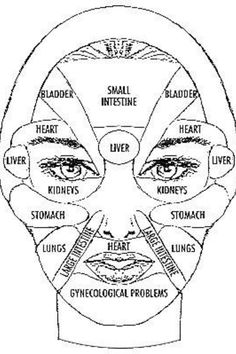 Body organs as pertains to location on the face.