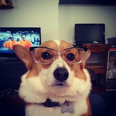 "Mochi got a new pair of glasses.  When told they were hip,  she responded, ""I know."""