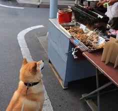 Curb Appeal: Japanese Street Foods - read on at kawaiistudyjapan.com