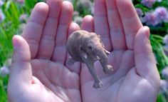 Magic Leap hires new content chief to bolster its defense against Microsoft's HoloLens http://onvb.co/P99pCDN