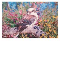 Today we celebrate this beautiful country, our home. A time to acknowledge and respect the traditional owners of this land, the fragile natural environment and all of the beautiful humans that share this magical island. Kookaburra postcard re-gram from @poppykural #kookaburra #australia #myislandhome