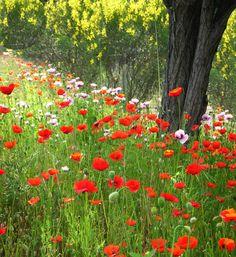 Spring in provence - Frejus, Provence-Alpes-Cote-dAzur