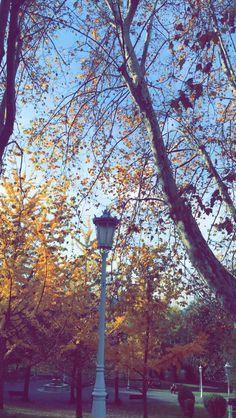 #parque #Arbol #Otoño #Invierno #Farola