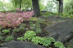 New York Botanic Gardens