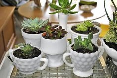 milk glass with succulents... Just did this... Love!