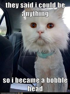 funny cat pictures - they said i could be anything  so i became a bobble head