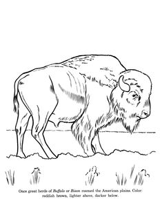 Wildlife Coloring Pages Printable | Print This Page] [Go to the next Page]