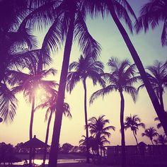 Hope everyone's having a fab start to their week!  #palmtreelove  www.tinystyle.com.au