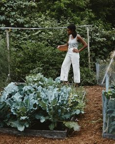 Farms Living, Farm Gardens, Urban Farming, Farm Life, Horticulture, Mother Earth, Wild Flowers, Raised Beds, Herbalism