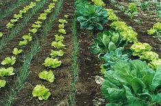 Huerto orgánico ecológico