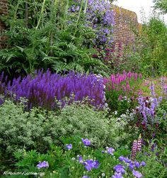 The purple border at Sissinghurst. The wall is covered with clematis and the border is filled with purple toned plants including lavender, knautia macedonia, and roses.