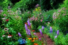 a Beautiful Rain Garden Create a stunning rain garden in areas of your yard with poor drainage.Create a stunning rain garden in areas of your yard with poor drainage. Sloped Garden, Hummingbird Garden, Plants, Butterfly Garden, Shade Garden, Milkweed Garden, Rain Garden, Garden Planning, Flowering Trees