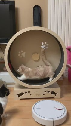Funny Cute Cats, Cute Baby Cats, Cute Cat Gif, Cute Cats And Kittens, Cute Funny Animals, Cute Cat Video, Kittens Cutest, Cute Wild Animals, Super Cute Animals