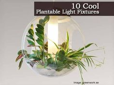Plants and light go together. Sometimes they really go together when you can find or create a plantable light fixture. For 10 cool light fixtures you can plants some greens in… visit the urbangardensweb.com post by clicking on the link below: Ten Cool Plantable Light Fixtures Protect Your Family From Toxic Products and Medications... Begin …