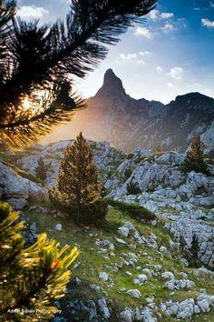 Bosnia de La Vida Lucida